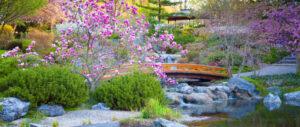 Japanese Gardening Basics